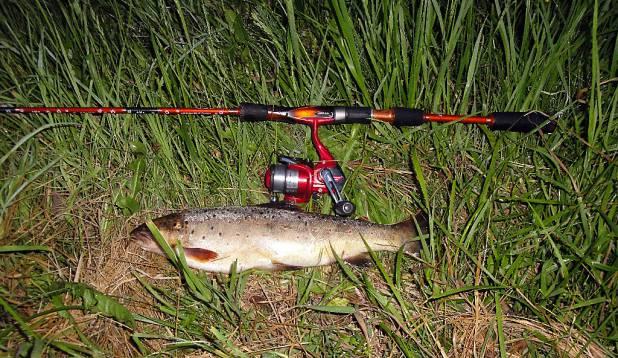 """ROHI MAHA! Pilt annab hea ülevaate kala suurusest. Pilt on terav ja hästi valgustatud. Häirivaks elemendiks on kala ees olevad taimed, mida oleks saanud eelnevalt """"rohida"""" või need kala alla peita. Foto: kalale.ee"""