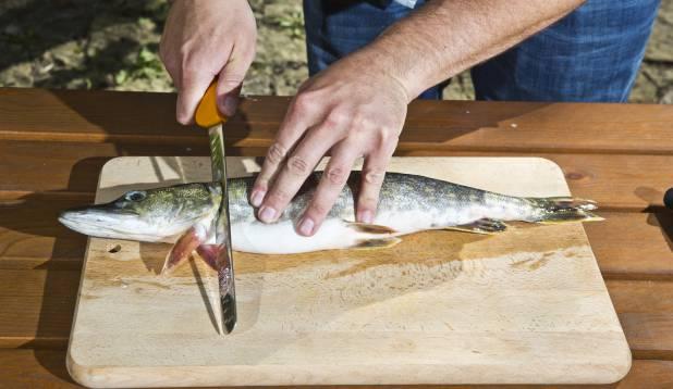 1.Tee sisselõige ümber lõpusekaare kala ninamiku suunas.