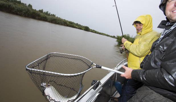 PÄEVA AUKÜLALINE. Seitsmekilone tõugjas ei avaldanud erilist vastupanu. Pärast kiiret fotosessiooni lasi Raivo looduskaitsealuse kala tagasi vette. Foto: Aivar Kullamaa.