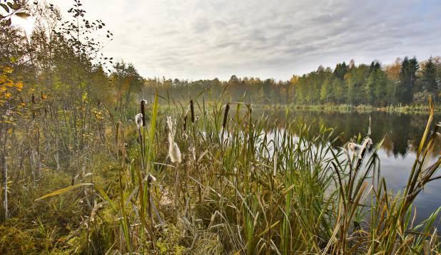 Salajärwe ääres Võrumaal. Foto: Aivar Kullamaa.
