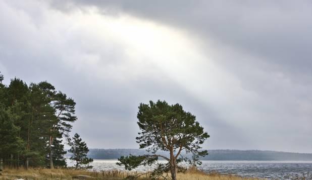 Rohusi saarel. Foto: Aivar Kullamaa.