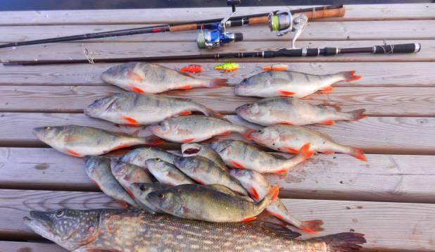 Minu mõõdulisemad tabatud kalakesed 390 g -st kuini 2+ kg -ni !