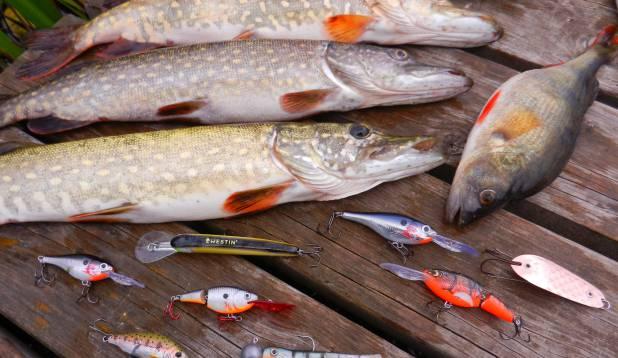 Sellel päeval kala toonud peibutised.