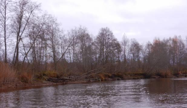 Sügiseselt raagus puud Emajõe kallastel.