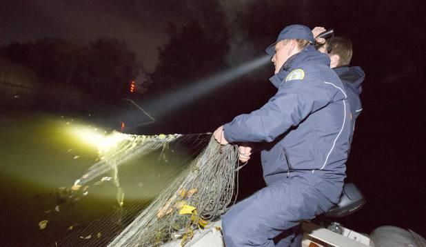 VÕRKUDE SAATUS. Röövpüüdjate võrgud võetakse välja, plommitakse kilekottidesse ja hiljem hävitatakse. Foto: Aivar Kullamaa.