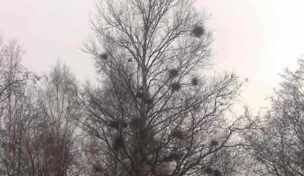 Lääne Soomes koha otsimas vol.3, 02. november 2014