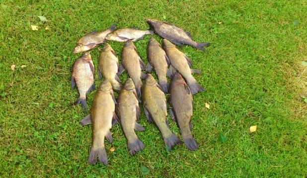 """TORMI TARUM: """"Sai proua kalale kaasa võetud. Tulemuseks 12 kala – Anu saagiks 8 linaskit ja minul 4 latikalipsu. Lõbus oli!"""""""