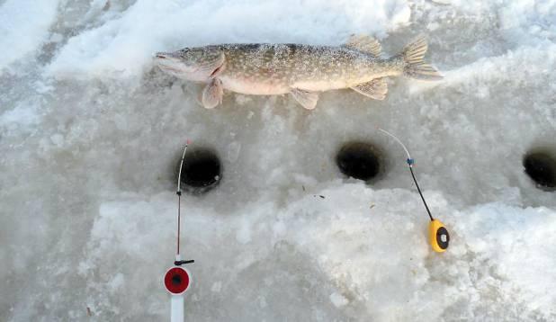 "UNNAHAUG. 2,78-kilone unnahaug eelmisest talvest. Foto: Sven-Erik ""Limonka"" Tomson"