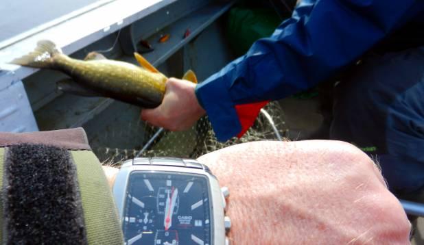 Peale kuut tundi loopimist tuli esimene kalakene õnge  :)