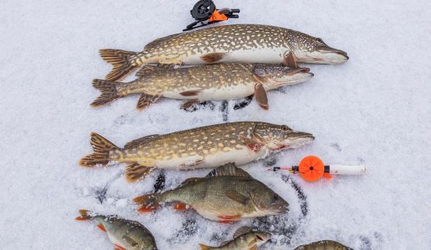 """Üks """"vaikne"""" esmaspäevane kalalkäik !"""