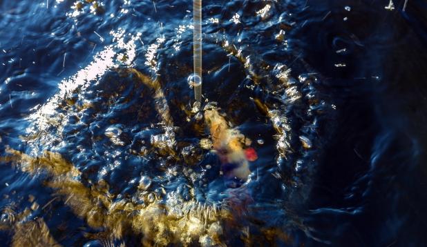 AHVENAD kui LABAKINDAD ehk kuidas mikro-jig ilusaid ahvenaid toob