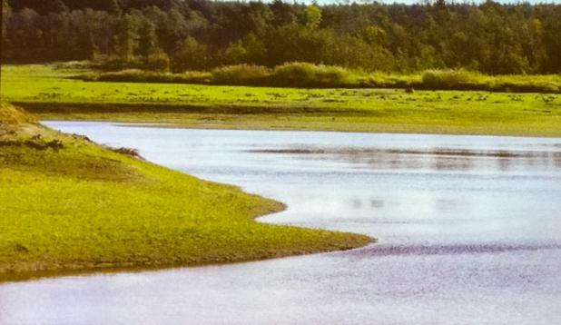Linnamäe elutu paisjärve asemele saagu elurikas ning kaunis lõhejõgi!