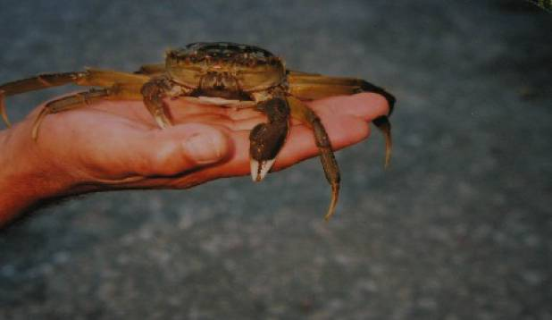 Pärnu jõe krabi vol 1