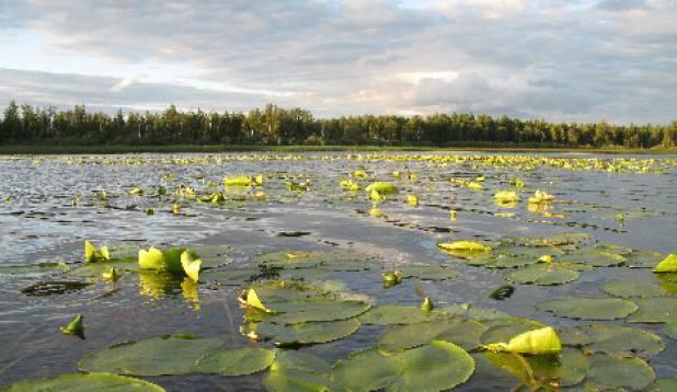elistvere järv