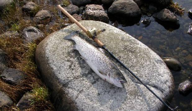 2,9kg merikas põhjarannikult,püütud  29,09,2007