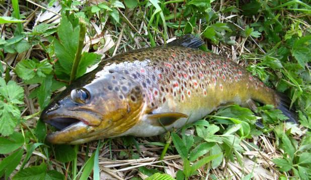 kala ja mis veel peamine:PUNANE