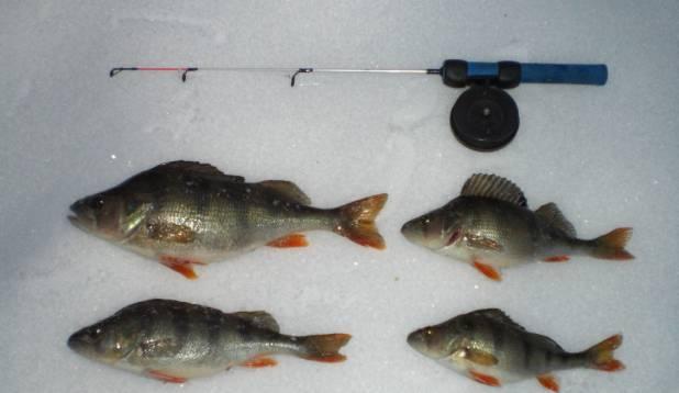 Õnnestunud kalalkäik