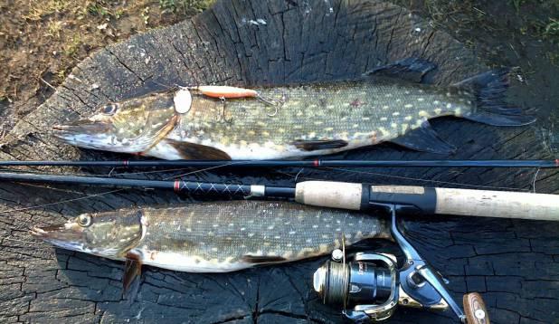 selle aasta esimene käik kodukandi kalavetele.