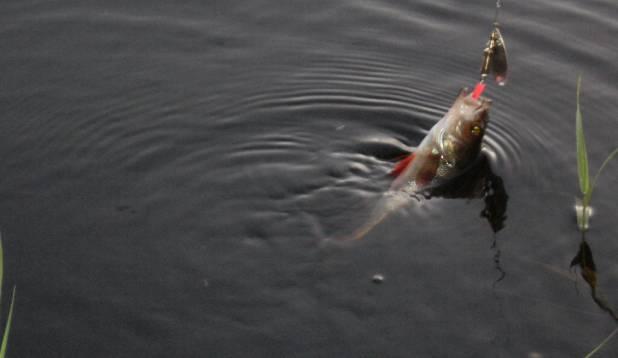 sai Värskas kalal käidud