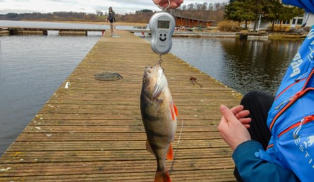 Micro jigi püük Viljandi järvel koos mõõdus kalakestega
