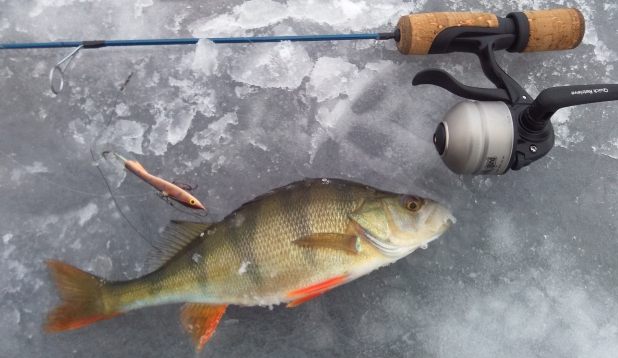 Jää kannab kala võtab.