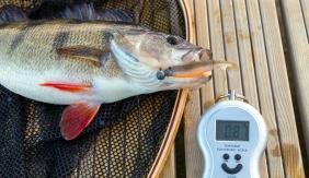 Westini lutiga suuremaid kalu püüdmas !