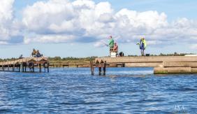 Elu mikrojigi püük Saaremaal!
