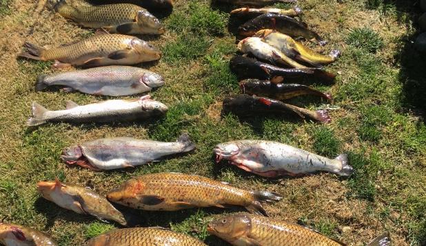 Lihdsalt kalalkäik